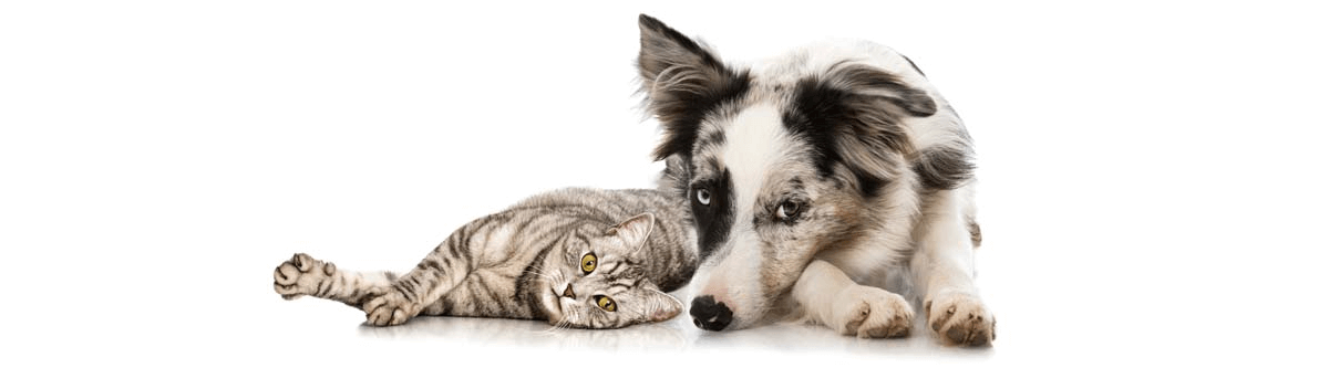 Maine Federation of Humane Societies, statewide network of companion animal welfare organizations working to support animal shelters, to promote the adoption of homeless animals and responsible pet ownership, and to end pet overpopulation through education, outreach, and advocacy.